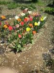 春の花02