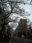 H30年 桜